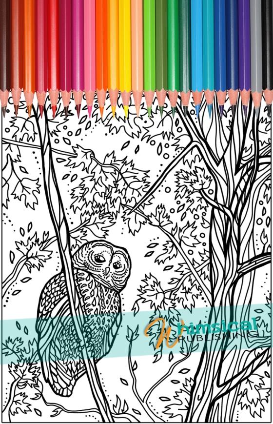 Owl_ColouringPage_Small